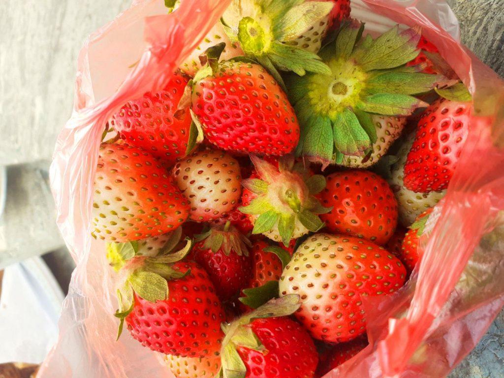 Strawberry from Kakani farm
